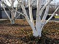 Strandbad Mythenquai 2012-03-07 15-03-21 (SX230).JPG