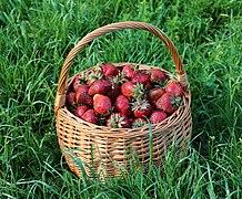 Strawberries in basket 2021 G1.jpg