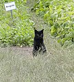 Stray cat on the farm (2844611222).jpg
