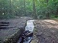 Stream in Swithland Wood - geograph.org.uk - 1471647.jpg