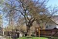 Strom Okna.jpg