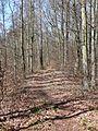 Stromberg-Schwäbischer Wald-Weg HW 10, Der Weg führt von Pforzheim über Besigheim und Backnang nach Lorch und hier über die waldreichen und einsamen Keuperhöhen des Stromberges. - panoramio (5).jpg