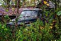 Studebaker - West Virginia - ForestWander.jpg