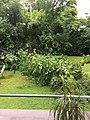 Sturmschaden Baum (29692430231).jpg