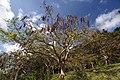 Sueyoshi Park Naha Okinawa Japan04s3.jpg