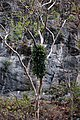 Sumidero Canyon, Grijalva River (8263637171).jpg