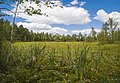 Swamp Setka drainage canal. 0129.jpg