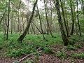 Swamp next to the Teufelsbruch swamp in summer 1.jpg