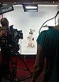 TV Dog.jpg