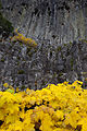 Table Rocks Wilderness (9503238440).jpg