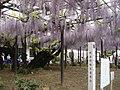 Takehana-Betsuin Fuji2008-1.jpg