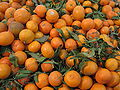 Tangerines with leaves & stems.JPG