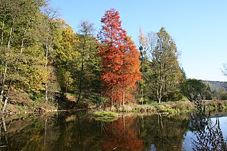 Rendeux - The Robert Lenoir Arboretum