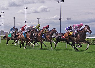 Woodbine Racetrack - Taylor turf course is an irregularly shaped racecourse.