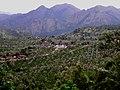 Tea plantations southern Western Ghats.jpg