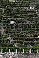Terrazzamenti della vite di Donnas abc2.jpg