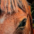 The Horse, a close-up.jpg