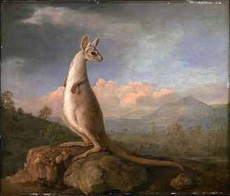 Australian art - George Stubbs, The Kongouro from New Holland, 1772