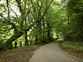 The road through Church Wood - geograph.org.uk - 1366129.jpg