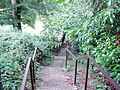 The steps leading to Poets Glen - geograph.org.uk - 547075.jpg
