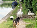 The towpath is closed to dogs - geograph.org.uk - 1495394.jpg