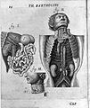 Thomas Bartholin, dissections Wellcome L0015606.jpg