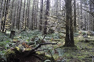 Tillamook State Forest forest in Oregon