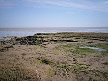 Tillingham Marshes - far eastern edge. - geograph.org.uk - 1311468.jpg
