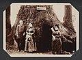 Title- (Fremont Tree) (16972222759).jpg