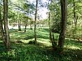 Tomašnica - Imanje Marulja - panoramio (1).jpg