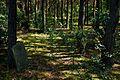 Tombstones - Jewish cemetery in Kolbiel, Masovian Voivodeship, Poland. - panoramio.jpg
