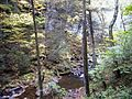 Trail-hills-creek - West Virginia - ForestWander.jpg