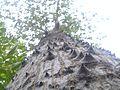 Tree. and.jpg