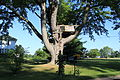 Tree House on Wells Road London Township Michigan.JPG