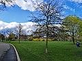 Trees and greeneries.jpg