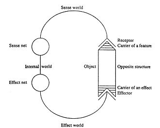Jakob von Uexküll - Schematic view of a cycle as an early biocyberneticist