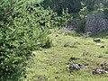 Une marmotte au loin sur le rocher aux marmottes à Eygliers (juillet 2020), 3.jpg