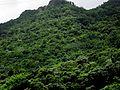 Utuado, Puerto Rico - panoramio (1).jpg