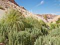 Valle de Jere-CTJ-IMG 5693.jpg