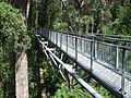 Valley of the Giants Tree Top Walk (2009).jpg