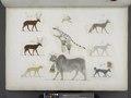 Varie specie di animali quadrupedi (NYPL b14291206-425574).tiff