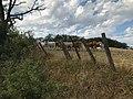 Veaux sur les coteaux de Pamiers.jpg
