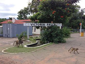 Victoria Falls, Zimbabwe - Image: Victoria Falls Station Baboons