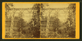 View of a railroad bridge from below, by Gaylord & Thompson.png