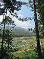 Views around Munnar, Kerala (65).jpg