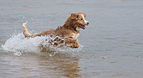 Viljo koirarannalla 18.jpg