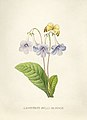 Vintage Flower illustration by Pierre-Joseph Redouté, digitally enhanced by rawpixel 03.jpg