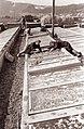 Vrtnarstvo s Prevalj 1961.jpg