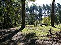 W lesie - panoramio (14).jpg