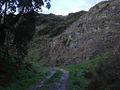 Waitomo Sheep Track - Flickr - Teacher Traveler.jpg